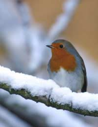 Winter Wildlife: Where To Go And What To See